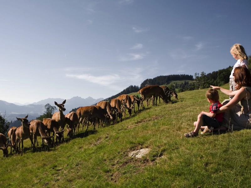 Wildpark Aurach Tirol
